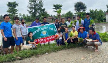 किसान कृषि सहकारी संस्थाद्धारा राष्ट्रिय धान दिवसमा 'दही च्यूरा खादै धान रोपाई'