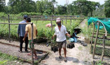 केर्खास्थित रतुवामाई वृक्षारोपण आयोजनाले निःशुल्क बिरुवाहरु वितरण गर्दै